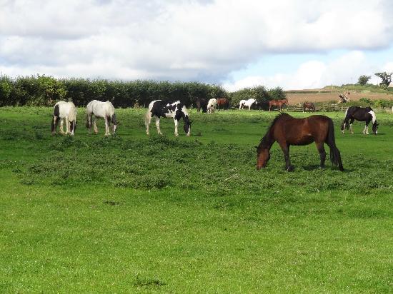 Rievaulx Abbey: Hike to Rievaulx included passing thru pastures