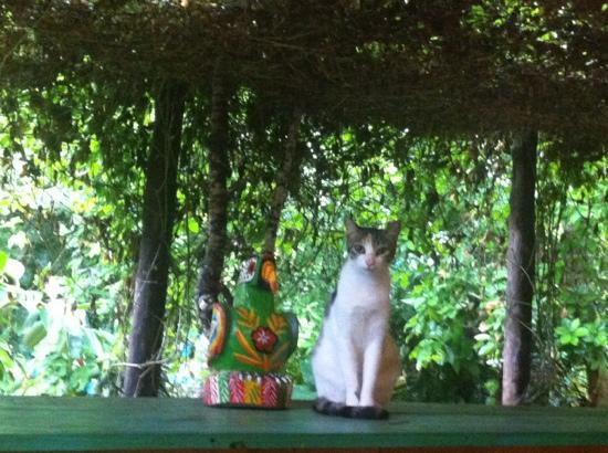 El Jardin de Frida: Coco