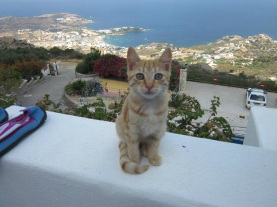 Nymphes Luxury Apartments: one of the many kittens o our terrace