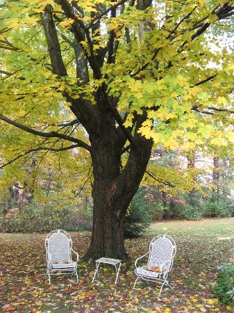 Birdsong Bed & Breakfast of Amherst: a view of the back yard of the B&B in foliage season