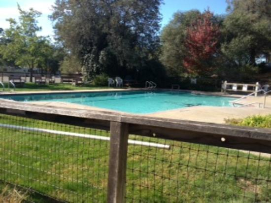 Placerville KOA: Nice pool and grass area, chairs, picnic tables and hot tub