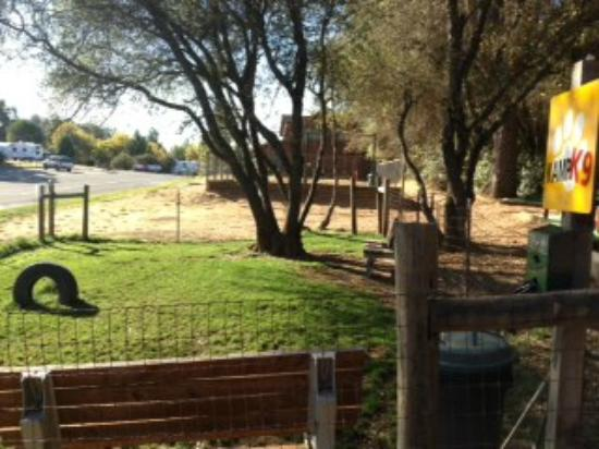 Placerville KOA: Pet area
