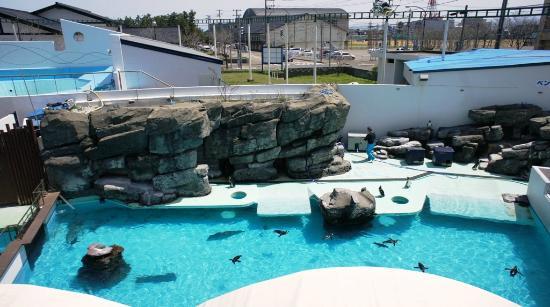 Joetsu Municipal Aquarium: 外はペンギン