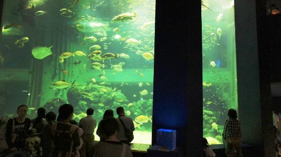 Joetsu Municipal Aquarium: 巨大な水槽