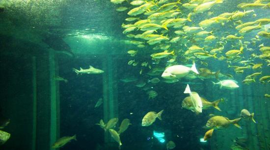 Joetsu, Япония: 水槽を2階から