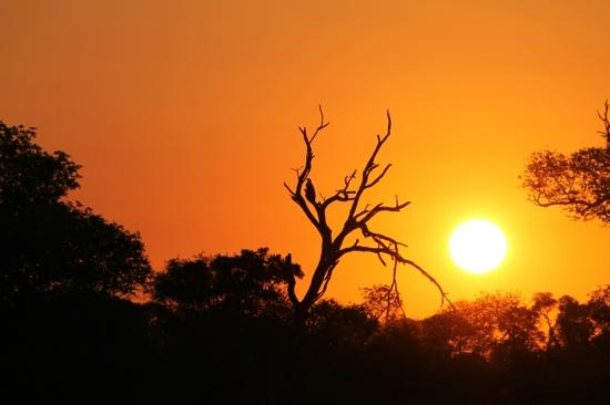 Rhino Walking Safaris at Plains Camp: Sonnenunterrgang