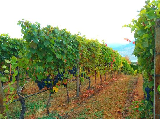 Penticton Sunshine and Wine day tours: One of the wineries.