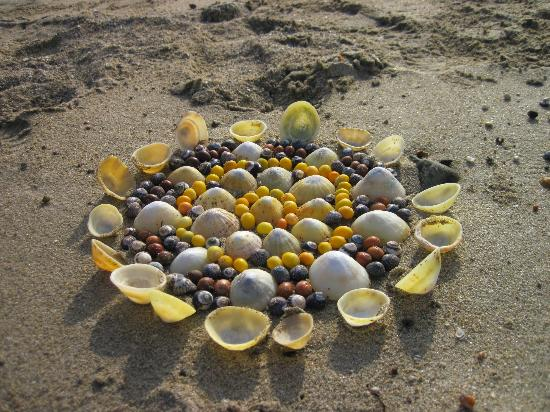 Shell Beach : Beach art