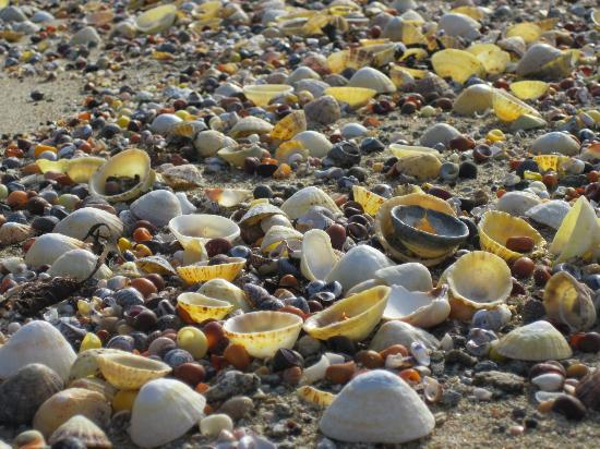 Herm, UK: Shell beach