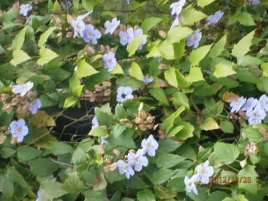 Vista Las Islas Hotel & Spa: Pflanzen im Garten