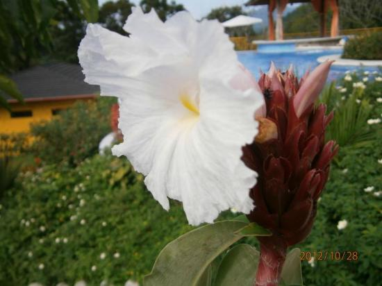 Vista Las Islas Hotel & Spa: Pflanze im Garten