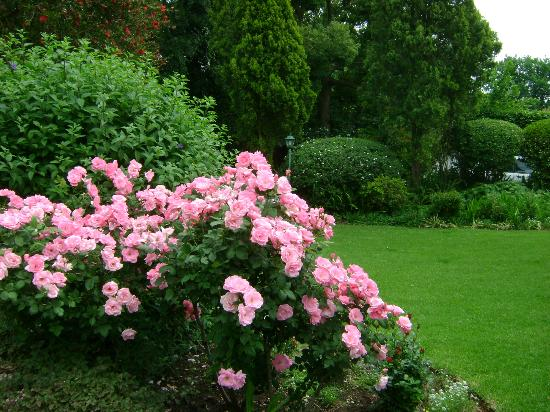 Rutland House Bed & Breakfast: Some of Delia's exquisite roses