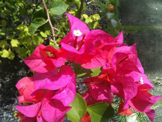 Radisson Grenada Beach Resort: Beautiful flowers surrounding hotel