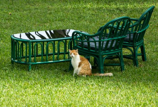 Sarova Whitesands Beach Resort & Spa : One of the hotel cats down on the lawn area