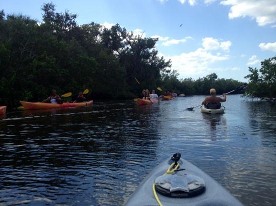 Gill Dawg Marina: Exploring the mangroves