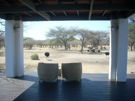 Emanya@Etosha: comfort and nature