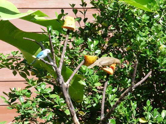 Hotel El Silencio del Campo: Birds sharing papaya breakfast