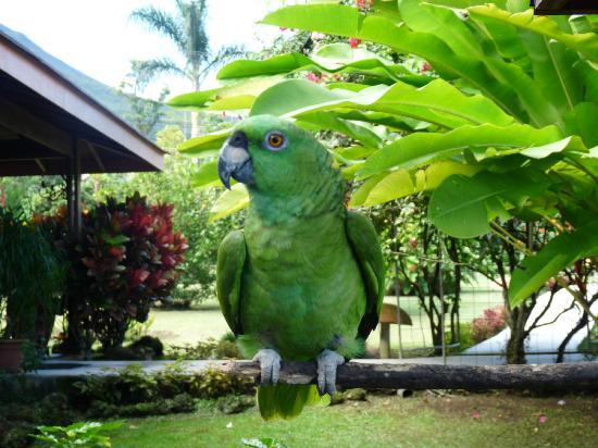 Hotel El Silencio del Campo: Parrot sitting near reception