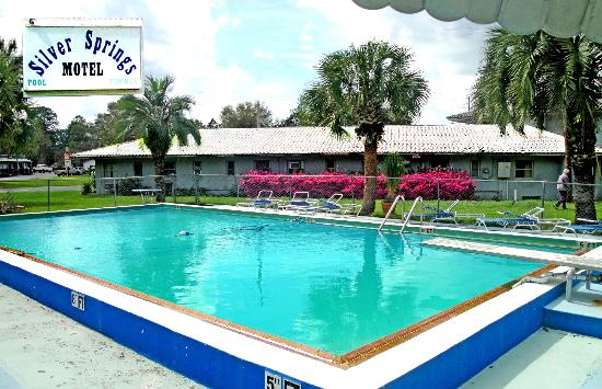 Silver Springs Motel POOL