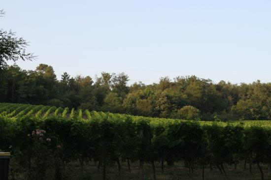 Camping Le Pressoir : The vineyard next to the campsite