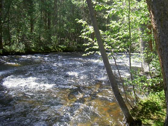 Adams Falls Trail : Summer Morning Along the Creek