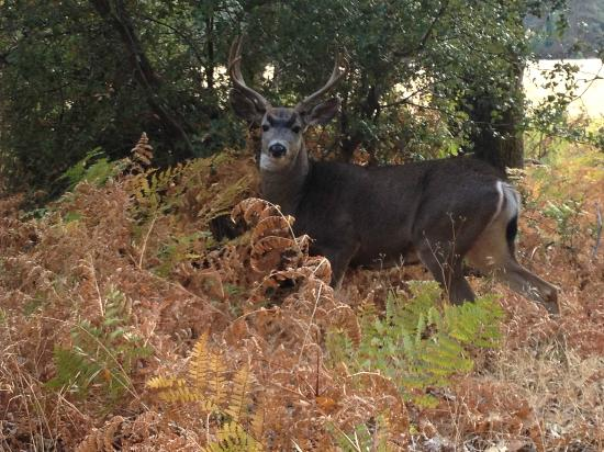 The Majestic Yosemite Hotel: New friend we made in the Valley