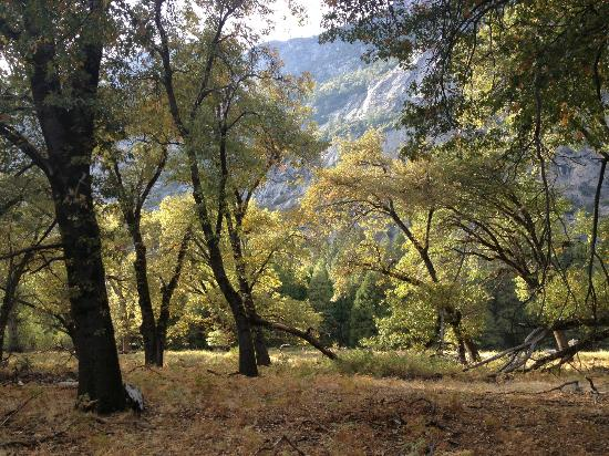 The Majestic Yosemite Hotel: A Walk in the Valley