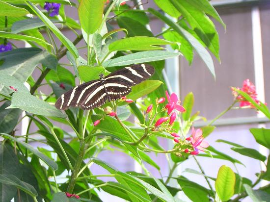The Centennial House Bed and Breakfast: Ask about our Butterfly Conservatory Package