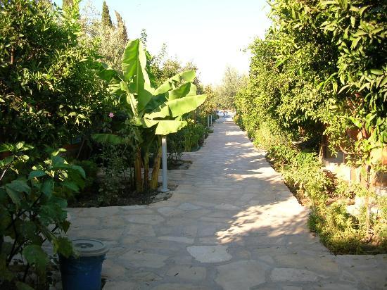 Ozlem Garden: Weg zum kl. Pool