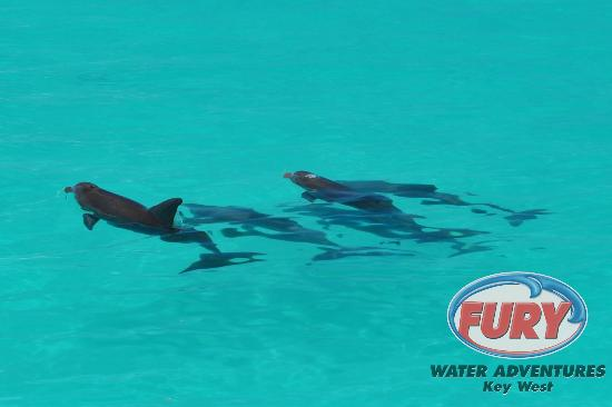 Fury Water Adventures Dolphin Watch