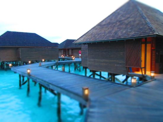 Veligandu Island Resort & Spa: Sunset water villas