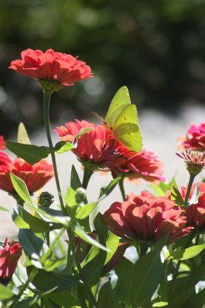 Heathcote Botanical Gardens Fort Pierce Aktuelle 2018 Lohnt Es Sich