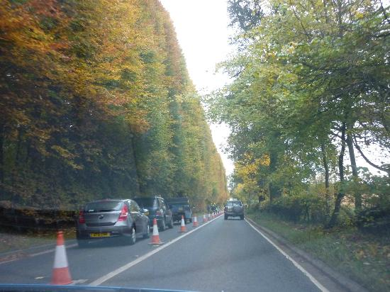 Meikleour Beech Hedge: Hedge on driving past. End October 2012