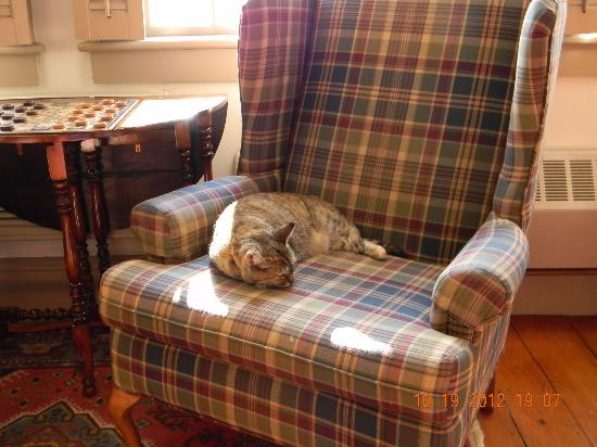 Rabbit Hill Inn: Reese the Inn's feisty cat