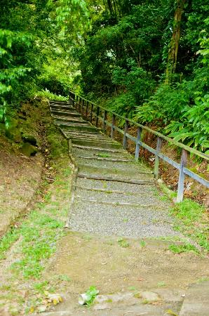 Serenity Vacations and Tours: Stair's path in Volcano drive in