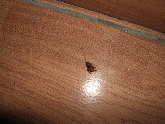 Veronica Hotel: Dead Cockroach