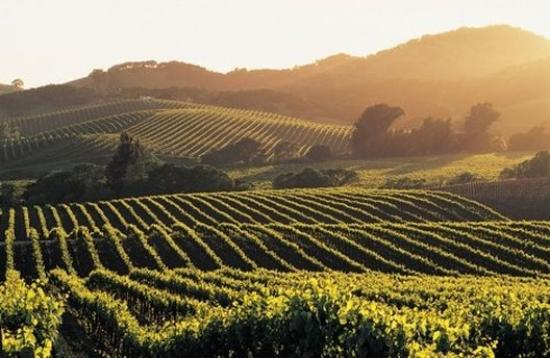 Rose Garden Inn: Napa Valley Vineyards Wine Grapevines