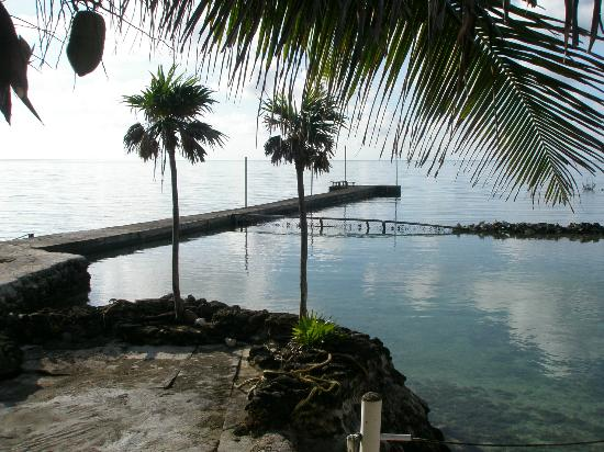 Reef House Resort: The Pier for Shore Diving