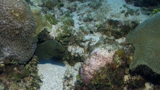 Reef House Resort: Moray
