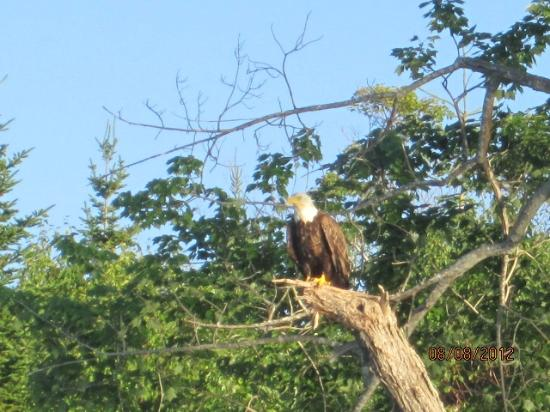 Cabot Trail Motorcycle Retreat : Eagle on The Bradour