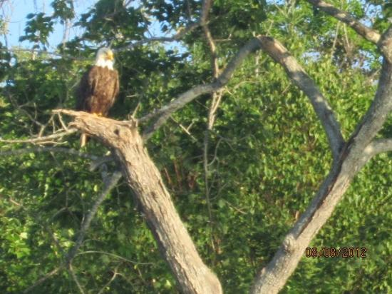 Cabot Trail Motorcycle Retreat : Eagel while on a tour