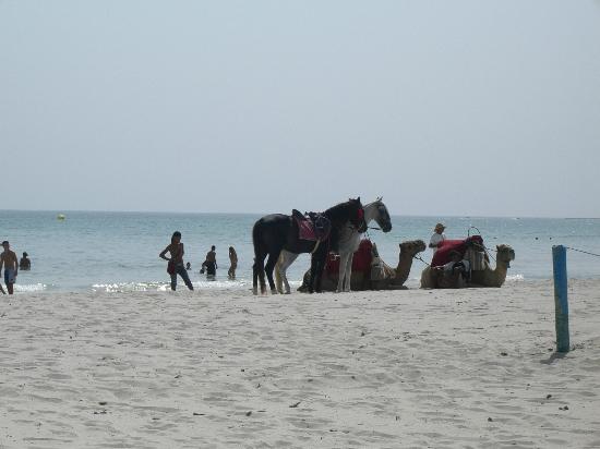 Palais des Iles Djerba Resort: Spiaggia
