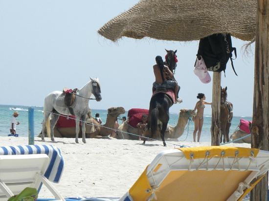 Palais des Iles: Si possono fare passeggiate a cavallo per 5/10 €