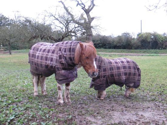 Iffin Farmhouse: Little Horses!
