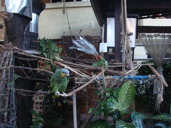 Pousada Casuarinas: Papagaio da Pousada