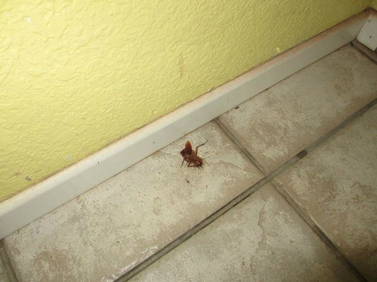 Koa Wood Hale - Patey's Place Hostel: Cockroach in the bathroom for days