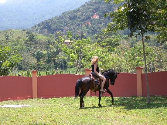 Tranquility Bay Beach Retreat : Horse back ride on jungle trails or gallop along the beach