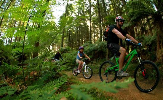 Mountain Bike Rotorua- Day Tours: Fun for all ages and ability levels!