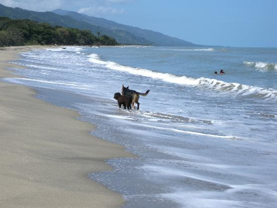 Tranquility Bay Beach Retreat: Beach walk on the Caribbean with your best friend