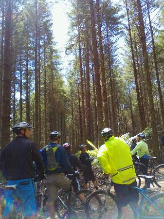 Mountain Bike Rotorua- Day Tours: Explore the forest with our guides